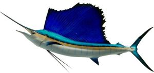 Costa Rica sailfish charters