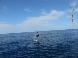 fishing-charters-quepos-4