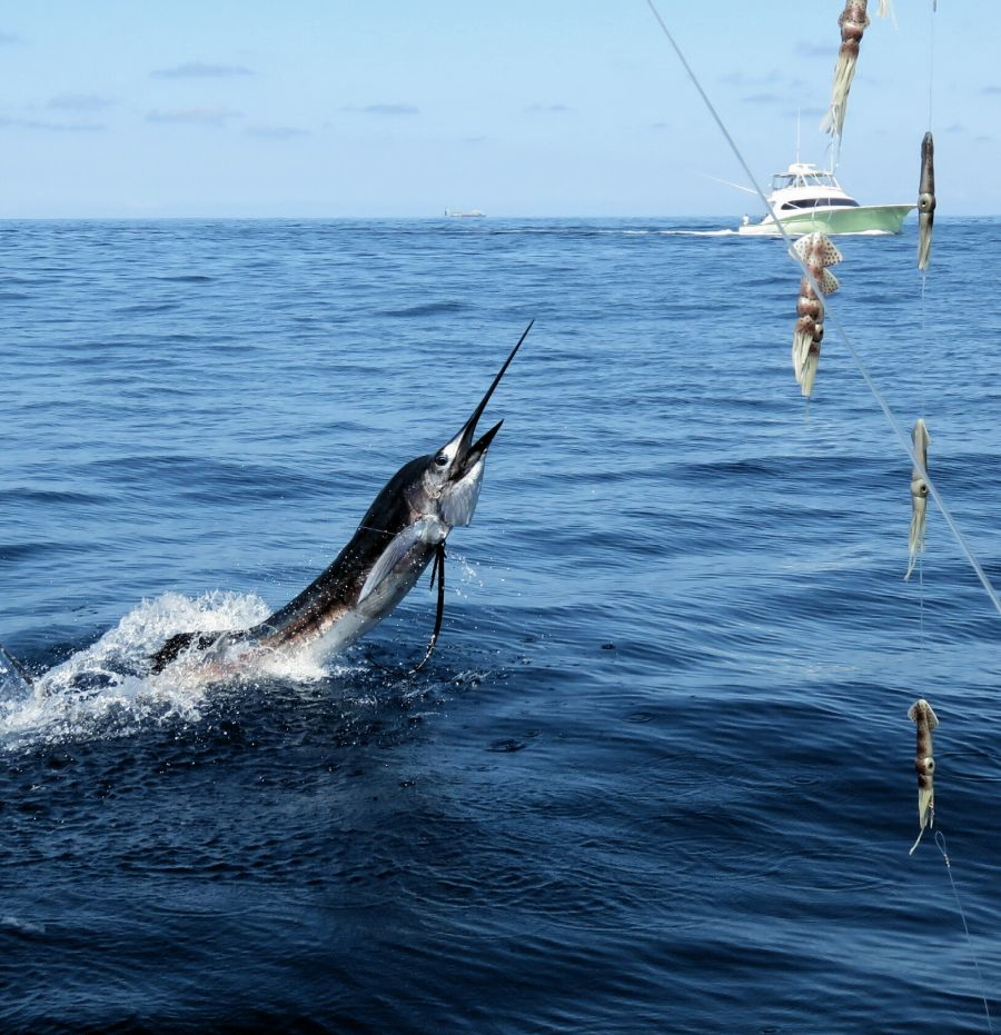 sailfish-charters-costa-rica(1)
