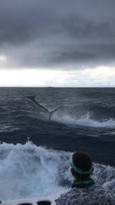 marlin catch and release